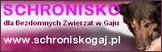 http://schroniskogaj.pl/